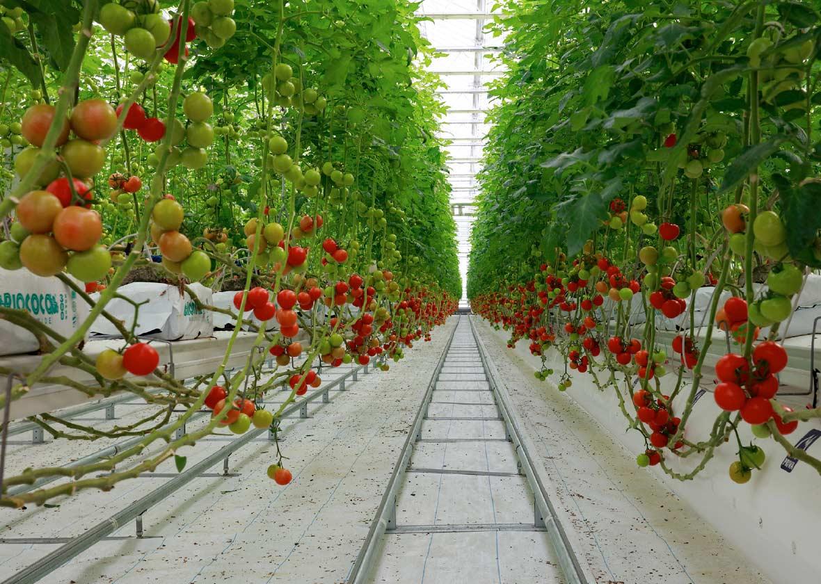 植物工場建設